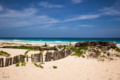 Dunes (InkedCrow) Tags: ocean wood beach sand dune puntacana drift
