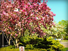 From the tiniest acorn, grows the mighty oak. (Trinimusic2008 - stay blessed) Tags: trees sky toronto ontario canada home nature grass blossoms newborn to bushes trinimusic2008 judymeikle wethenorth welcomelennoxquincy