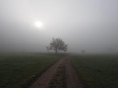 (xelladrillox) Tags: autumn light sun mist tree fall misty fog germany lens track mood moody darkness path foggy olympus kit f28 omd em1 1240mm