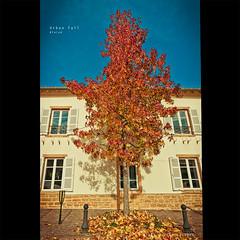 Urban fall   Gleiz (dominikfoto) Tags: street blue autumn sky house tree fall automne leaf nikon sigma bleu ciel maison arbre feuille fusina 1020mmf456 d3s fusinadominik