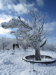 Frozen Tree (keithmaguire ) Tags: city blue trees winter white mountain snow tree car asian snowboarding san asia asien do skiing view snowy south peak cable korea explore korean vista candidate asie olympics southkorea venue aasia chang asya  chairlift azia azi core  corea sia  sdkorea selatan  gangwondo coreia gangwon  chu coreadelsur pyeongchang hnquc    yongpyeong pyeong   zsia  gneykore   mygearandme mygearandmepremium mygearandmebronze mygearandmesilver mygearandmegold mygearandmeplatinum mygearandmediamond