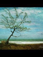 Earth, Water & Sky (ABD HALIM) Tags: beach photoshop malaysia pantai cs3 tanjungjara canon7d texturizedimage kameraburuk