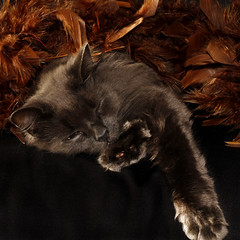 Oh, this sleeps so well...! (Solomulala | mostly weekends ;-( !) Tags: sleeping cat square de grey gris foto quilt feathers gato poes bosquedenoruega solomulala muriel murieldejong