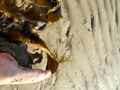 4235_Aberdyfi11 (looklooklooking) Tags: shadow seaweed london art feet beach water river happy photography dance movement sand artist dancing legs contemporary joy performance biosphere estuary pointofview glorious jules alive author tidal myeyes rapture liveart fee fineartphotography rockpools aberdyfi auteur tidalpools greem shadowdance mybody dyfi corporeal shotfrominside carefreemoments dyfibiosphere juleslooklooklooking looklooklooking juleslooklooklookingcom instagramjuleslooklooklooking