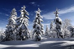 fluffy blanket (gregor H) Tags: trees winter snow cold clouds forest landscape shadows bright spirit christmastree firtree blanketofsnow infinestyle snowcurl
