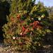 360_Trees_2011_149