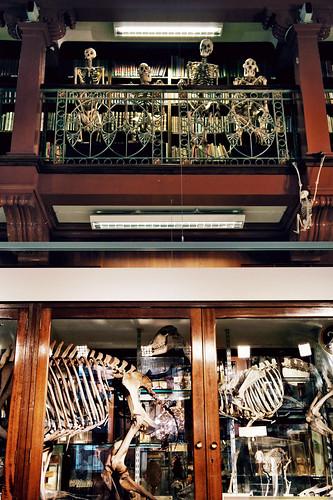 Skeletal onlookers