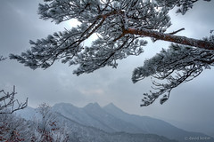 Wind and Snow (davidkoiter) Tags: cloud mountain snow david cold tree ice nature weather pine canon outdoors eos december branch wind hiking south deep overcast korea hike blow falling growth needle 7d l series recreation endurance range f4 hdr 1740 persistence durable endure f4l gyeryong gyeryongsan koiter