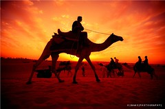 Royal Ride in the Golden Sand !! { E X P L O R E D } (girish_suryawanshi) Tags: nikon d7000 tamron 2875mm f28 dj gary girish s photography suryawanshi explore rajasthan jaisalmer colors landscapes desert portraits silhouette nature sky clouds evening cold golden sunset
