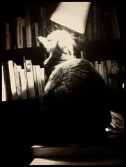 Bedtime Ritual (liquidnight) Tags: camera light blackandwhite bw cats pets home lamp monochrome look animals night table reading feline books illuminated whiskers smell harriet bedtime ritual sniff bedside bookshelves katzen iphone moggy postsecret tortoisehsell iphone4 iphoneography