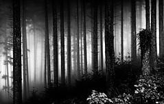 Hansel and Gretel (Daniel Wildi Photography) Tags: wood blackandwhite mist monochrome fog fairytale forest switzerland deep berne 2012 hanselandgretel brothersgrimm gebrüdergrimm hänselundgretel bantiger cantonofberne danielwildiphotography