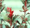 Magia ... (Mariló Irimia) Tags: plant planta bush nikon niceshot jardin photoediting graden arbusto softtone psedition ediciónfotográfica olétusfotos tonossuaves mygearandme marilóirimia marilóirimiafotografía ediciónconps ediciónconphotoshop