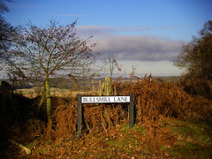 Bullsmill bracken (Rich Saunders) Tags: trees fern tree english woodland walking landscape countryside walks country british bracken ferns hertfordshire stapleford footpaths sacombe stoneyhills stonyhills chapmoreend