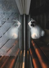 267 | 365 {explore} (Randomographer) Tags: snow reflection window cat kat feline curtain explore gato katze 猫 macska חתול kočka 貓 katt kissa köttur selfie kucing кошка 고양이 feliscatus γάτα project365 365days canonglass cc100 แมว conmèo बिल्ली randomographer rslphotography rslphotographics