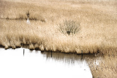 Hinterm Deich (ausschnittsweise) # 2 (ajurgenowski) Tags: lake reed netherlands pool landscape coast eau nederland zeeland côte shore paysage teich landschaft paysbas schilf watercourse niederlande étang kueste roseau kamperland littoral debanjaard gewaesser noordbeveland hintermdeich nikond90 provinciezeeland behindthedike