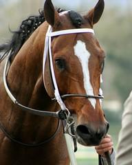 Tapizar (kimpossible pics) Tags: horse racetrack horseracing racehorse thoroughbred arcadia equine santaanita santaanitaracetrack tapizar steveasmussen winchellthoroughbreds sanfernandostakes