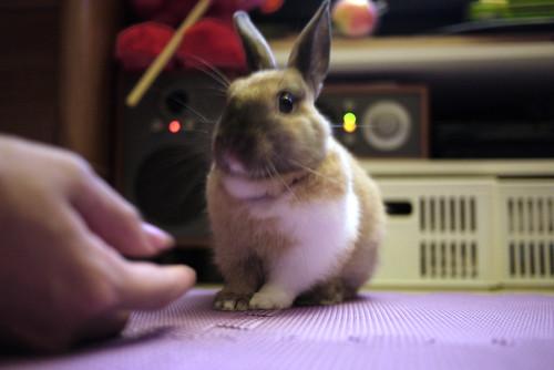 兔-NANA_46
