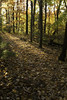 Awakening (slarsen327) Tags: trees sunlight fall nature forest wow1 wow2 wow3 mygearandme mygearandmepremium mygearandmebronze ringexcellence
