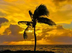 (ragtops2000) Tags: ocean sunset sky tree island hawaii nikon colorful pacific maui palm aloha kihei d300 18200vr mygearandme mygearandmepremium rememberthatmomentlevel4 rememberthatmomentlevel1 rememberthatmomentlevel2 rememberthatmomentlevel3 rememberthatmomentlevel9 rememberthatmomentlevel5 rememberthatmomentlevel6 rememberthatmomentlevel10