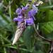 Flora di Machu Picchu (2)