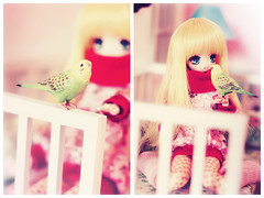 Dolly Diptych 1/52: Birdy cuddles (Hiritai) Tags: anime cute girl yellow hair miniatures bed budgie neko rement decals diorama hinachan obitsu 23cm 21cm parabox obitsus