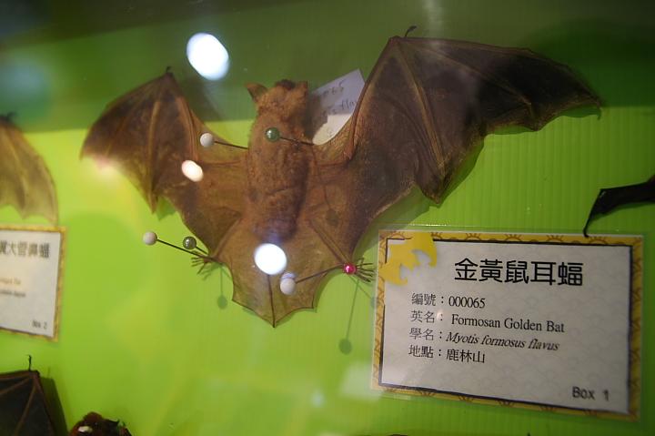 雲林水林黃金蝙蝠生態館(誠正國小)0006