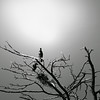 cormorants (gagilas) Tags: sun birds cormorants delete2 woods save3 save7 save8 delete save save2 save9 save4 save5 save10 save6 curonianspit neringa savedbydeletemeuncensored perykla