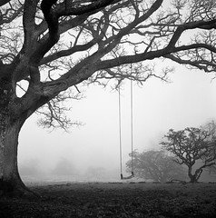 Murton (polarisandy) Tags: mist black tree abandoned tlr fog rolleiflex square lost oak noir moody sad swing forgotten cumbria vintagecamera inversion rowan ilford fp4 isolated mountainash planar twinlensreflex lonley selfdeveloped edenvalley 75mm murton fp4plus homedeveloped 35f melencholia fellside frankeheidecke highcupnick synchrocompur heidosmat melencholic ilfosol3 polarisandy