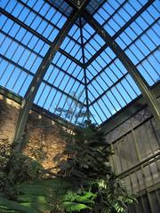 Under the glass roof (Jardins des Plantes - Paris) (Sokleine) Tags: paris france heritage 19thcentury greenhouse botanicalgardens hothouse serres jardindesplantes 75005 grandesserres detalhesemferro