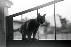 Dj Vision - Bourgeois 3 (Dj Vision  s) Tags: chats cit vision crimea yalta sebastopol kacha dj djvision citdeschats