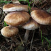 "Shrooms<br /><span style=""font-size:0.8em;"">Nome/Autor: Ricardo Bessa<br /></span> • <a style=""font-size:0.8em;"" href=""http://www.flickr.com/photos/72855537@N05/6816790481/"" target=""_blank"">View on Flickr</a>"