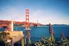 Echium of the Golden Gate (Leighton Wallis) Tags: sanfrancisco california birthday ca usa plant flower water bay unitedstatesofamerica goldengatebridge fortpoint 75thanniversary ggnpc11