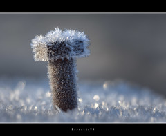 Baby, it's cold outside (Borretje76) Tags: macro netherlands field metal iso100 iron crystals dof crystal bokeh sony sneeuw sigma f10 bolt glimmen shallow enschede depth kristal metaal bout ijs koud 180mm glinstering glinster glinsteren freesing kristallen gupr borretje76 dslra580 boutindeleuningvaneenbruggetje