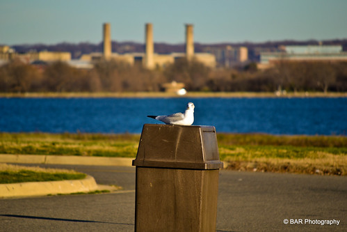 Gravelly Point Park - across from the Ronald Reagan National Airport