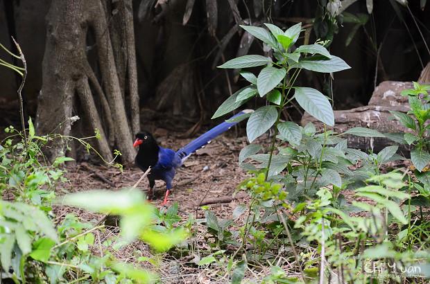 木柵動物園鳥園19.jpg