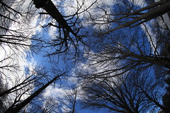 "touching the sky (dtsortanidis) Tags: blue trees winter sky clouds canon mark branches fisheye greece ii 5d dimitris dimitrios metsovo ""flickraward"" 815mm tsortanidis"