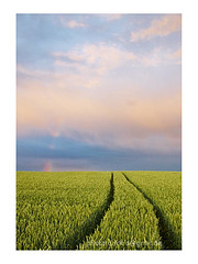 Grn (Dirk Dietrich) Tags: field way camino infinity horizon landwirtschaft feld crop vanishing horizont weg kornfeld getreide fahrzeugspuren traktorspuren withsky undenlichkeit