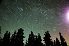 Forest Stars, Kuolio, Northern Finland (Steve Weaver) Tags: trees tree pine forest suomi finland stars star movement delay long exposure time north trails silouette trail northern timed mantu