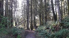 20160331_090013 (ks_bluechip) Tags: creek evans trails preserve sammamish usa2106