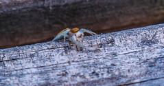 Unwelcome guest 2 (david_sharo) Tags: closeup spider moraine davidsharo