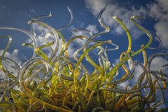 """Sol de Citron"" (Chihuly in the Garden) (HamWithCam) Tags: atlanta chihuly atl hamwithcam hwc abg atlantabotanicalgarden 24105l 5d2"
