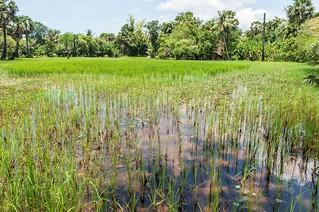 angkor - cambodge 2014 13