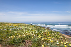 Noyo Headlands Park (Zlatko Unger) Tags: ocean california park ca pacific headlands mendocino noyo