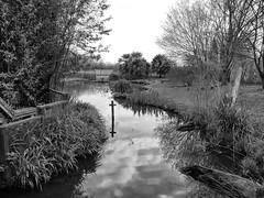 London Wetland Centre in black & white (un2112) Tags: blackandwhite bw london nature water monochrome creek cross crane april wwt wetland wetlandcentre panasonicg7