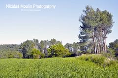 L (Nicolas Moulin (Nimou)) Tags: food verde vertical champs vert cultivos agriculture cereals cereales brin campos trigo bl agricultura espiga germe alimmentation