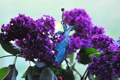 28/5.2016 - in the lilac hour (julochka) Tags: lilacs turkey dervish 366
