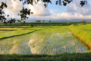 bali nord - indonesie 4
