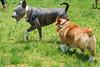 16-05-15_untitled_427 (Daniel.Lange) Tags: dog philadelphia dogs dogdayafternoon spado columbussquarepark