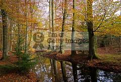 Leuvenumse Bos (DolliaSH) Tags: autumn holland fall canon europe herbst herfst nederland thenetherlands 7d 1022mm veluwe 1022 gelderland canonefs1022mmf3545usm canoneos7d dollia sheombar dolliash