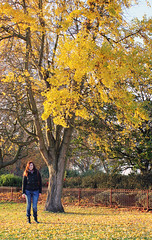 Yellow (fotosiris) Tags: park winter england colour tree london nature canon eos battersea 550d